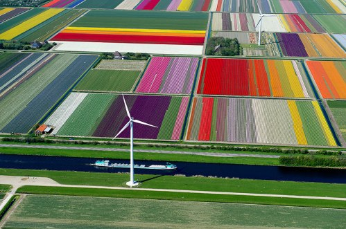 birds-eye-view-aerial-photography-11-tulip-fields-netherland